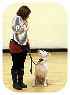 Barking Mad Dog Training Club dog image